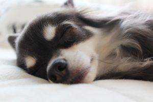 睡眠は大切です