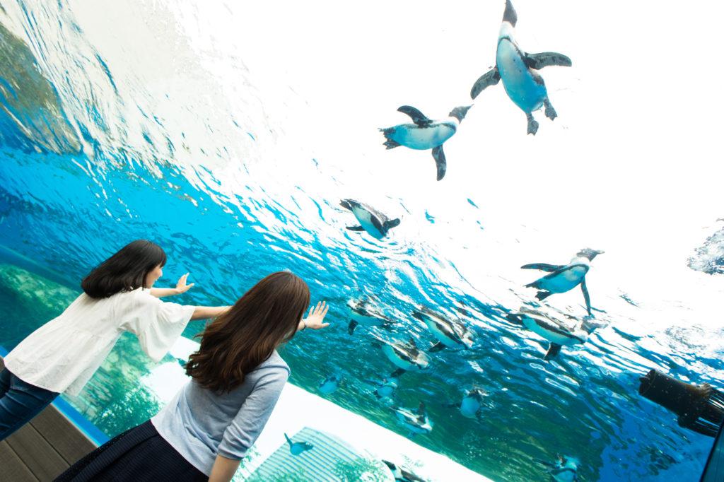 ペンギン・ダイビングタイム