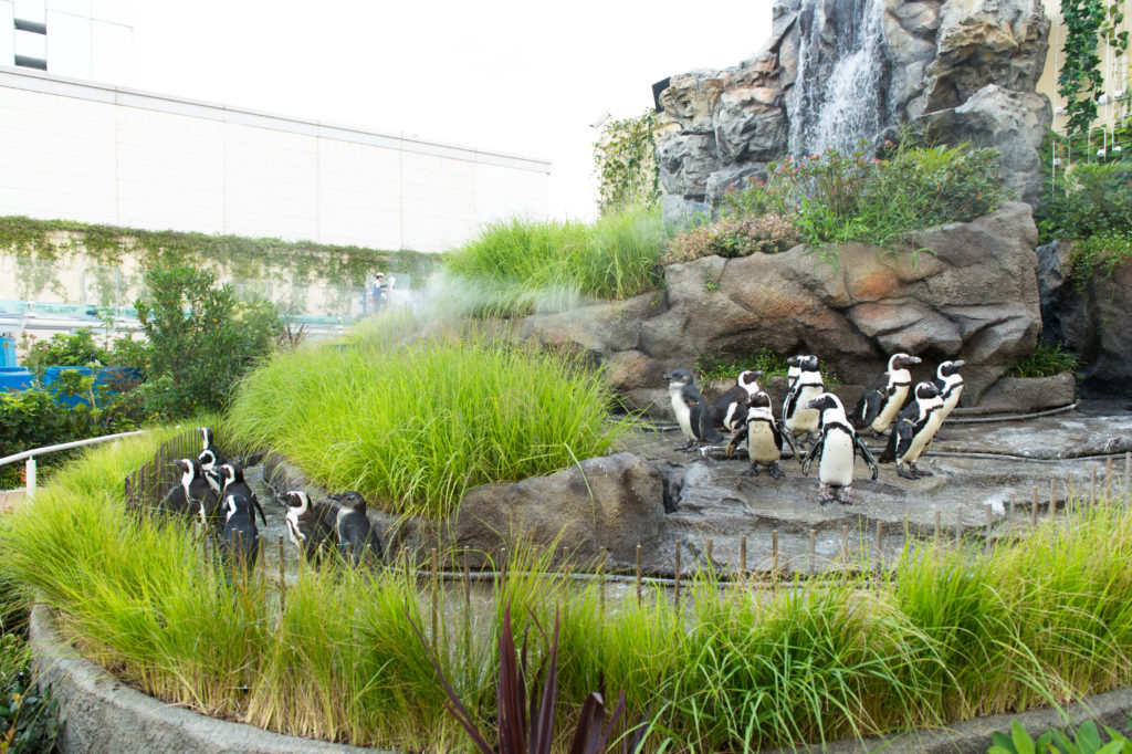 草原のペンギン