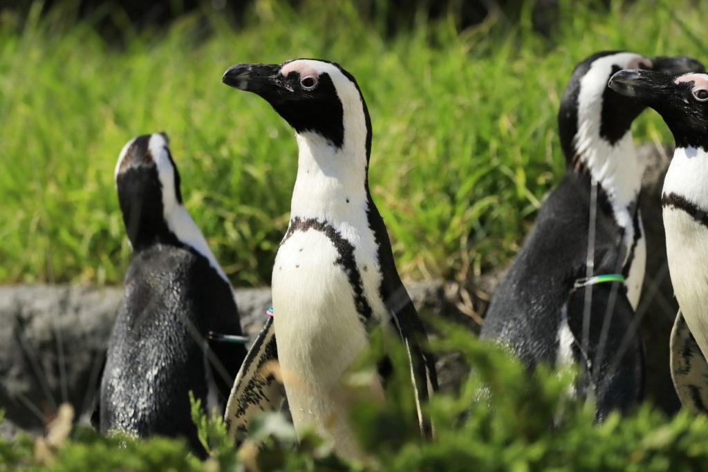 ペンギンフィーディングタイム