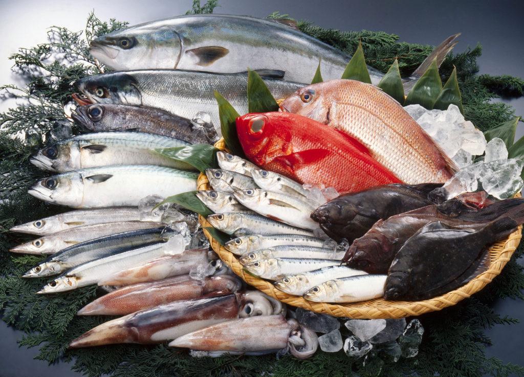 鮭や金目鯛
