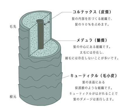 たんぱく質の繊維