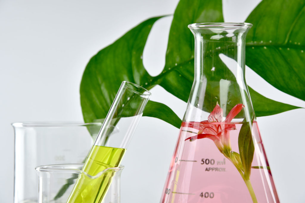 植物幹細胞