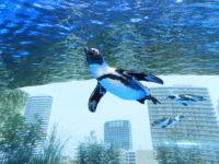 【猛暑日でも安心な屋内の遊び場】「空飛ぶペンギン」が池袋に出現!