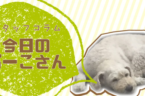 【スタッフコラム】今日のぶーこさん、海は友達!!編