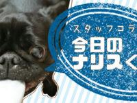 【スタッフコラム】今日のナリスくん、反抗する編